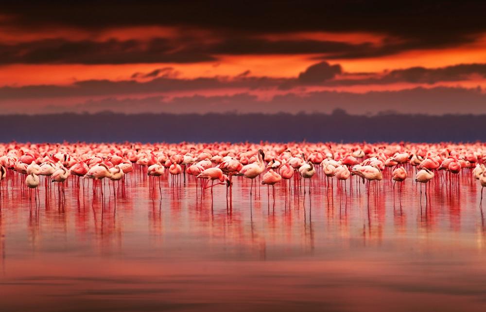 Kenya-flamingos-Lake-Nakuru